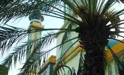 Uniknya Pohon Kurma Masjid Al-Barkah Bekasi